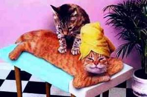 cat_massage